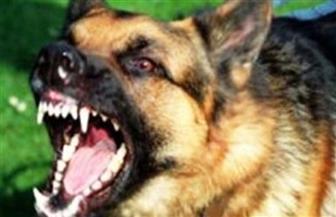 """""""بيطري الدقهلية"""": كلب شرس يعقر شخصين وجار البحث عنه"""