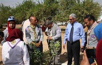 غرس 400 شجرة جوافة و100 شجرة ليمون بجامعة جنوب الوادي | صور