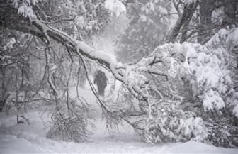 مقتل شخص واقتلاع آلاف الأشجار في عاصفة ثلجية بموسكو