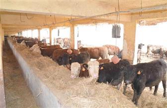 الزراعة: 187 مليون جنيه تمويل جديد لمشروع البتلو لصغار المربين والمزارعين