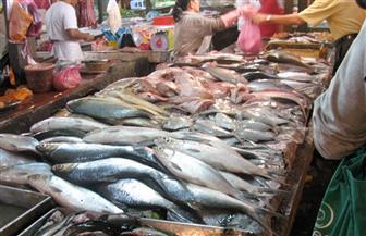 ضبط أسماك ودواجن منتهية الصلاحية في حملة بيطرية بالمطرية