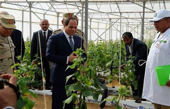 """""""30 يونيو"""".. ثورة تحقق إنجازات غير مسبوقة في القطاع الزراعي"""