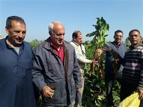 36 طنا إنتاجية الفدان في حقل إرشادي لمحصول بنجر السكر بالغربية | صور