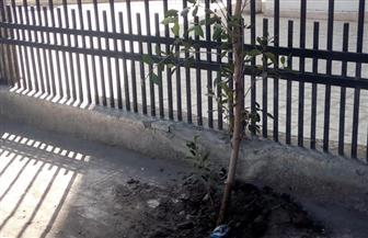 طلائع مراكز الشباب يزرعون أشجار سور مديرية الشباب والرياضة بدمياط