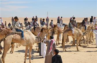 688 متسابقا يتنافسون في المهرجان الثاني لسباق الهجن بشرم الشيخ اليوم