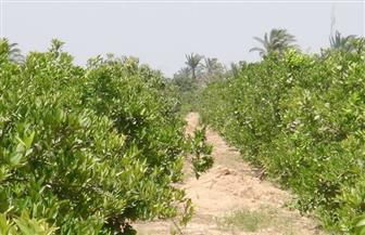 السعودية تطلب بيانات المزارع المصرية لاعتمادها قبل الإستيراد