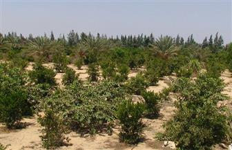 الري تنهي 92.5 % من استصلاح 400 ألف فدان بشمال سيناء على مياه ترعة السلام | صور