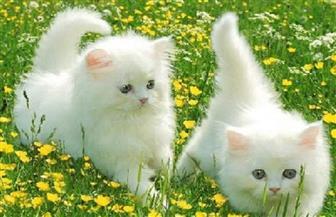 كيف عرف الرسول أن القطط طاهرة والكلاب نجسة؟