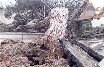 سقوط شجرة بشارع فيصل بسبب سوء الأحوال الجوية