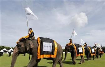"""انطلاق بطولة """"كأس الملك لبولو الأفيال"""" الخيرية في تايلاند"""