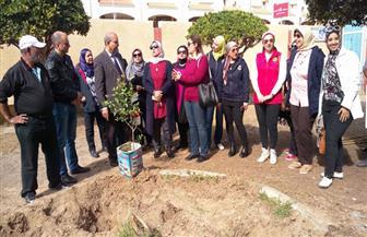 زراعة 500 شجرة مثمرة بمدارس بورسعيد | صور