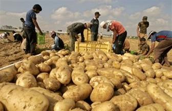 ارتفاع صادرات مصر الزراعية لأكثر من 5 ملايين طن