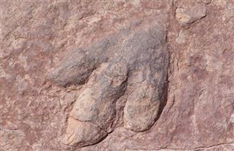 بيع ديناصورين في مزاد بفرنسا