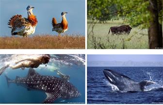 شاهد.. أضخم الحيوانات والطيور على وجه الأرض| صور