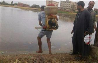 إزالة 18 مشتل أرز في الشرقية