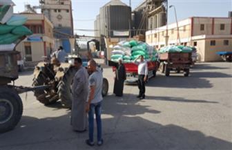 تموين كفر الشيخ: كميات القمح الموردة من الفلاحين بلغت 129 ألف طن حتى اليوم