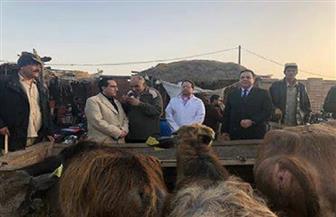 تحصين 62 ألف رأس ماشية للوقاية من الحمى القلاعية بالدقهلية