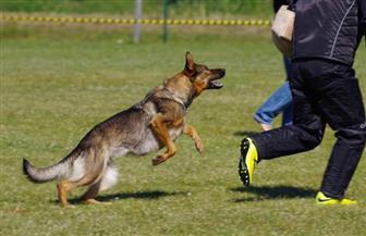 ألمان يحرضون كلبين على مهاجمة إريتريين ويعتدون عليهما بالضرب