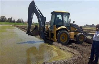 الزراعة تزيل 348 مشتل أرز مخالف بمحافظة الغربية