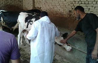"""تحصين 504 رؤوس ماشية ضد """"الحمى القلاعية"""" بسوق شربات غرب الإسكندرية"""