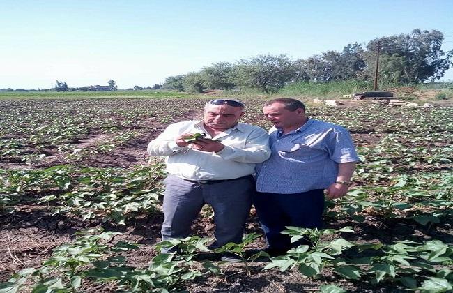 زراعة الغربية تطالب بمراقبة نوبات رى القطن مع ارتفاع درجات الحرارة   صور -