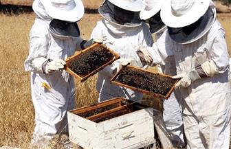 «الزراعة»: 10 وصايا  لمربي النحل لمواجهة الظروف الجوية المتقلبة
