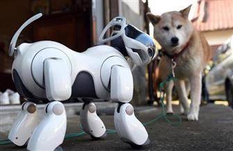 """باحثون في سويسرا يبتكرون """"كلبا إلكترونيا"""" لإنقاذ ضحايا الكوارث"""
