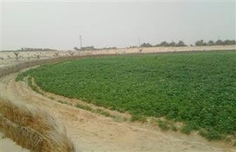 نائبة تطالب بإعلان الأرض الزراعية محمية طبيعية وتحديد نطاقها