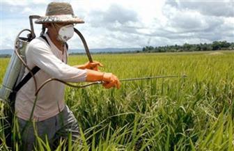 """بقايا المبيدات تستبيح الأجساد.. خبراء: """"الزراعة العضوية"""" صمام الأمان و5 نصائح طبية لتلافي آثارها"""