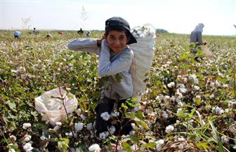 لجنة من وزارة الزراعة تفحص محصول القطن بمحافظة الغربية