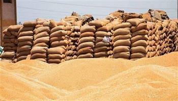 صوامع الإسكندرية تستقبل 13 ألفا و696 طن قمح منذ بدء موسم الحصاد