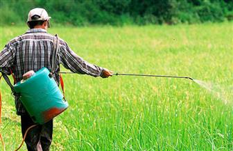 """""""الزراعة"""" تنفي استخدام مبيدات زراعية للخضراوات والفاكهة تسبب العقم"""