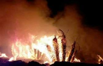 السيطرة على حريق هائل نشب في أشجار المانجو والنخيل بقرية المحاميد  بإدفو