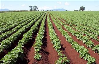 """""""المصرية للتنمية الزراعية"""" تتعاقد مع شركات  بيلاروسية وهندية لتوفير معدات"""