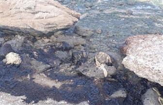 """""""البيئة"""": احتواء تلوث زيتي بشاطئ معهد علوم البحار بالسويس"""