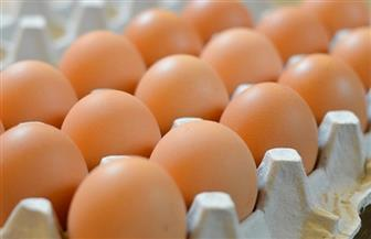 """نقابة الفلاحين تحذر من تأثير قرار """"تصدير البيض"""" على السوق المحلي"""