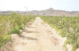 مزرعة وادى القويح بالقصير.. نقلة بالقطاع الزراعى فى البحر الأحمر| صور