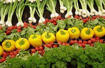 رئيس الغرفة الفرنسية يعلن إطلاق برامج جديدة لمضاعفة الصادرات الزراعية المصرية للسوق الأوروبية