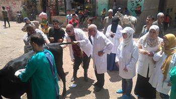 علاج 757 رأس ماشية فى 5 قوافل بيطرية بمراكز محافظة الغربية