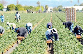 الزراعة الأمريكية تصرف مساعدات للمزارعين للتخفيف من آثار الحرب التجارية