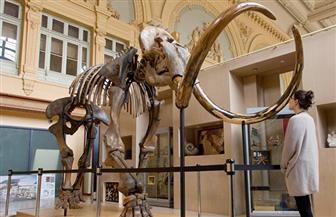 العثور على هيكل فيل عاش قبل 3 ملايين عام بالجزائر