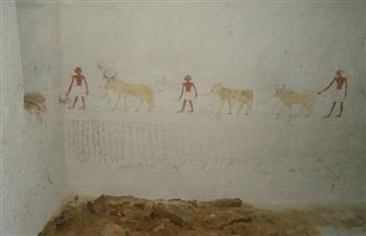 اكتشاف أثري جديد.. العثور على حجرات الدفن الخاصة بمقبرتي ريموشتني وباكت الثاني بالمنيا| صور