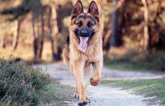 ضبط 3 أشخاص لترويعهم الطلبة بواسطة كلب شرس بالدقهلية