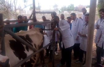 مديرية الطب البيطري بدمياط  تنظم قوافل لتحصين الماشية | صور
