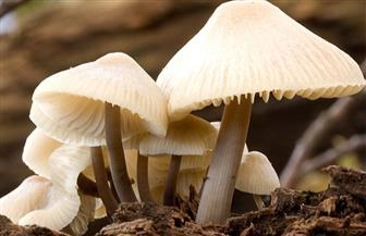 قطع فنية قابلة للتحلل البيولوجي.. المشروم ينمو على جذوع الخشب في نيويورك