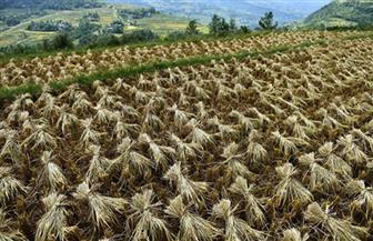الصين تكتشف جينا يزيد من إنتاجية المحاصيل ويقلل التلوث