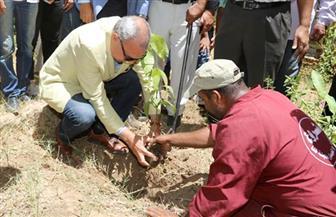 محافظ قنا: نستهدف زراعة 2500 شجرة تنفيذا لمبادرة الرئيس خلال مؤتمر الشباب   صور