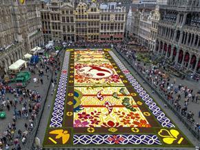 سجادة زهور زاهية تخطف الأنظار فى وسط بروكسل رغم حرارة الصيف