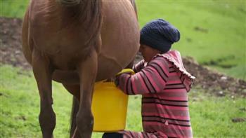 فوائد أسطورية لحليب أنثى الحصان.. وإجازة شرعية من علماء الدين| صور