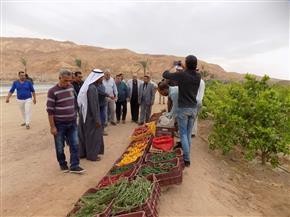 4 سنوات من التحديات تثمر مشروعات تنموية في كافة المجالات بجنوب سيناء | صور